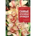 Самые красивые орхидеи