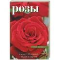 Розы: около 100 лучших видов и сортов