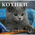Календарь. Котики: Лучшие кото-фото. 365 дней в году