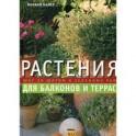 Растения для балконов и террас