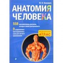 Анатомия человека. Медицинский атлас