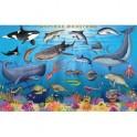 Морские животные. Цифры и факты. Настольное издание