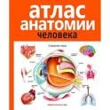 Атлас анатомии человека