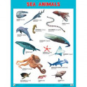 """Морские обитатели. Плакаты """"Sea Animals"""""""