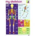My Skeleton chart