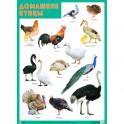 Развивающие плакаты «Домашние птицы»