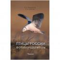 Птицы России.Фотоопределитель