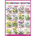 """Плакат """"Полевые цветы"""""""