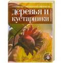 Современное декоративное садоводство. Деревья и кустарники. Энциклопедия (+CD)